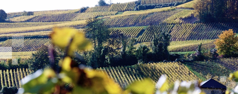 Beaujolais Nouveau i najbardziej szalone tradycje winiarskie